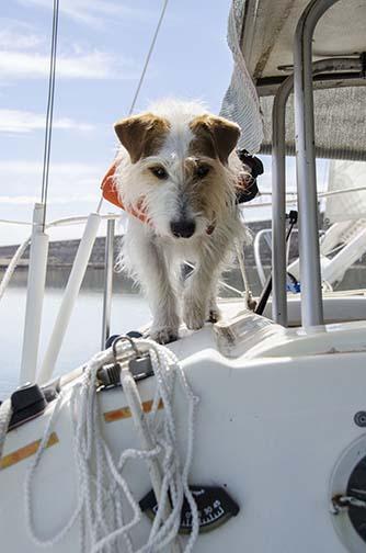 zip sailing